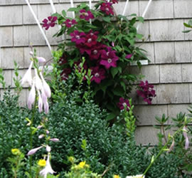 Fine Gardening Frog Hollow Landscapes