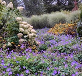 Shrubs and Flowers